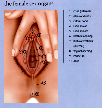 Picture of Female Genitalia.